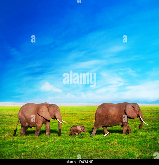 Elephants family on African savanna in Amboseli, Kenya, Africa - Stock Image