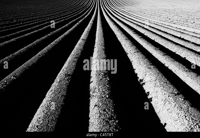 Ridge and furrow ploughed field pattern. Monochrome - Stock Image