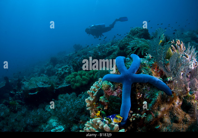 East Timor Stock Photos & East Timor Stock Images