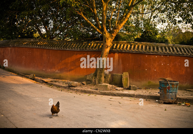 Rooster in street, Chongqing, China - Stock Image