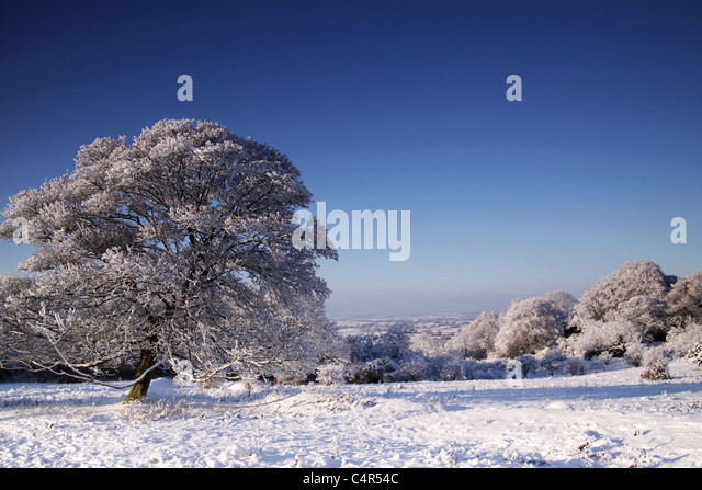 trees covered in snow - Stock-Bilder