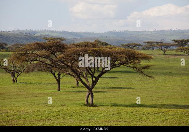 African landscapes. Kenya. - Stock-Bilder