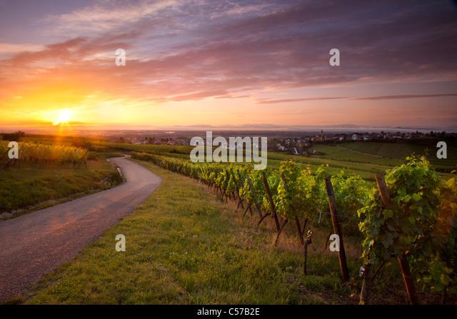Sunrise over vineyards along the famous Route des Vins near Zellenberg, Alsace France - Stock Image