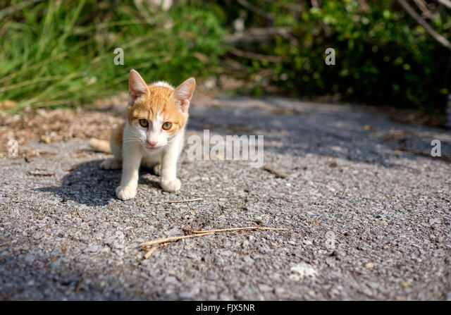 Portrait Of Cat Sitting On Field - Stock Image