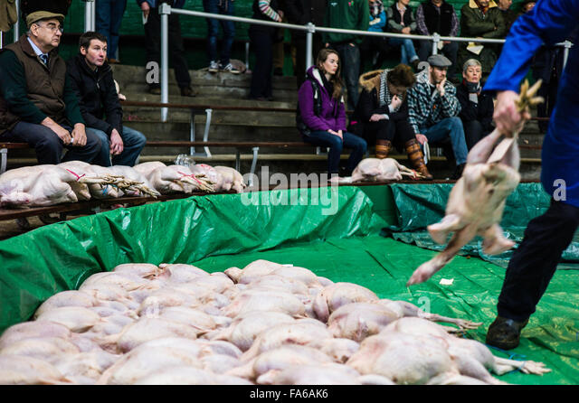 St. Boswells, Galashiels, Scotland, UK. 22nd December 2015. Christmas poultry, including geese, turkeys, pheasants, - Stock Image