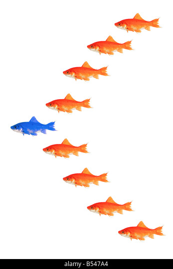 goldfishes - formation - Stock Image