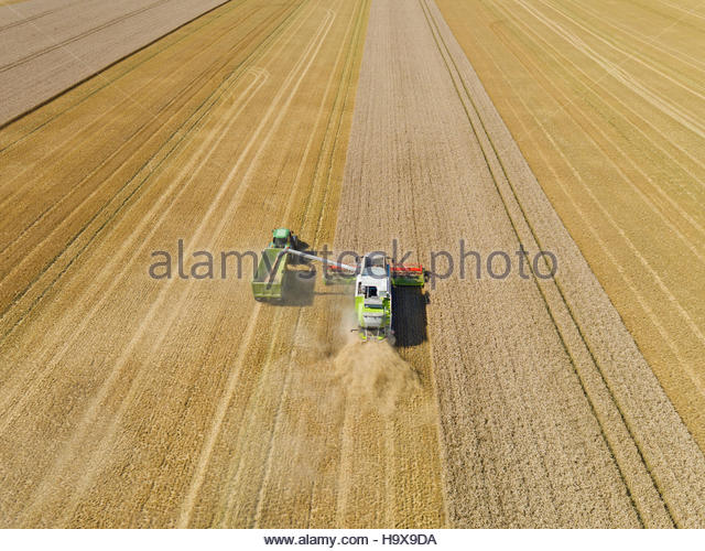 Aerial View Of Combine Harvester Harvesting Wheat Crop - Stock Image