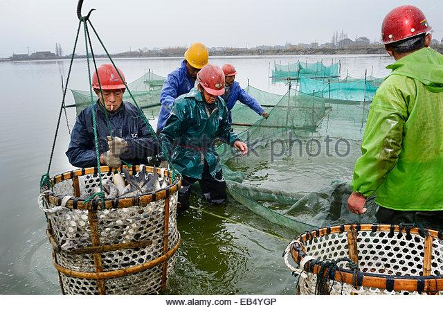 Aquaculture china stock photos aquaculture china stock for Koi fish farm near me