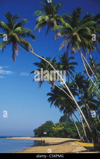 Tropical palm trees over the beach at Beruwela on the west coast of Sri Lanka - Stock Image
