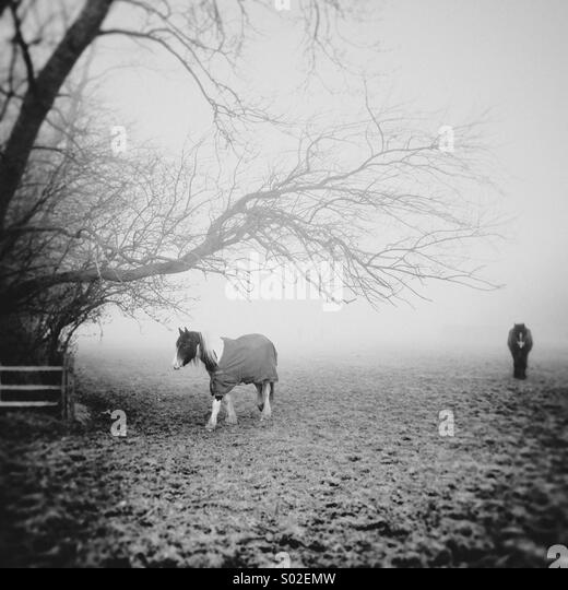 Two horses trekking through the fog one across the scene and the other towards camera beneath an overhanging tree - Stock Image