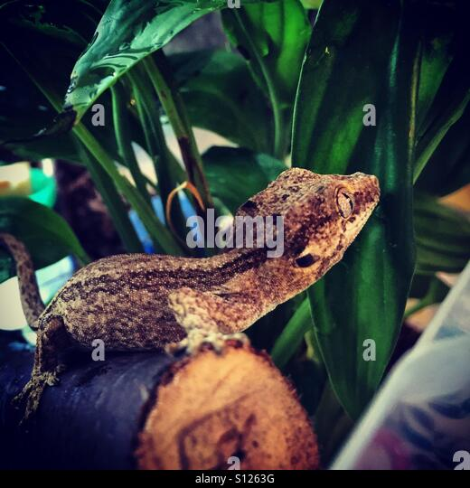 Baby gecko - Stock-Bilder