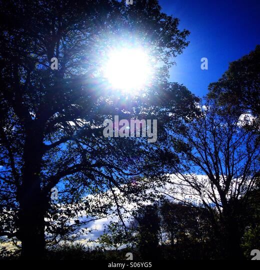 Sunshine and trees - Stock Image