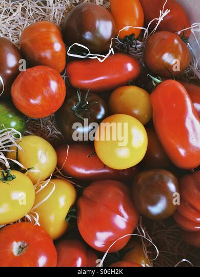 Different colour tomatoes in a tray - Stock Image