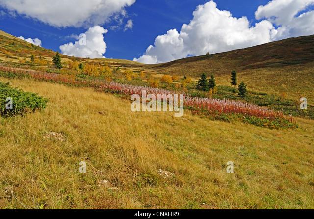 mountain meadow autumn above - photo #9