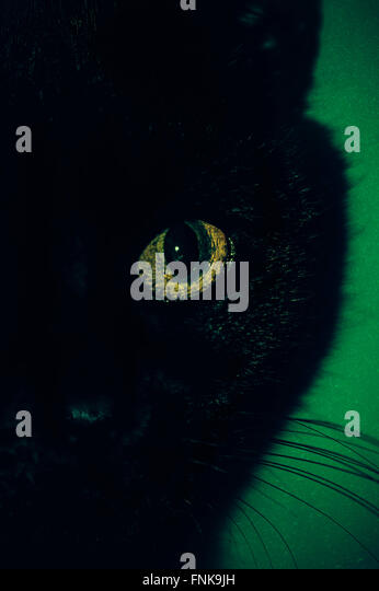 black cat eye close up - Stock Image