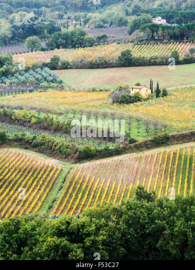 Europe, Italy, Tuscany.  Vineyards and olive trees in autumn in the Val d'Orcia region of Tuscany. - Stock-Bilder