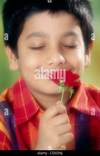 small young boy smelling red rose   MR#152 - Stock Image