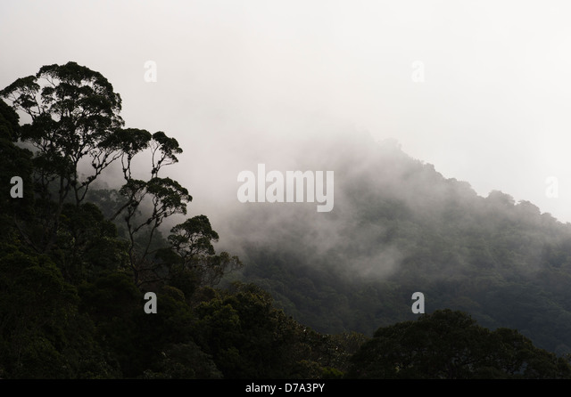 Colombia - misty rain forest in the Sierra Nevada de Santa Marta - Stock Image