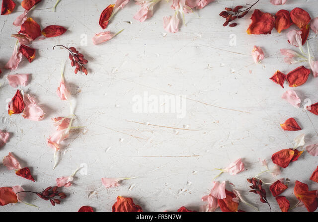 Frame from dried flower petals horizontal - Stock Image