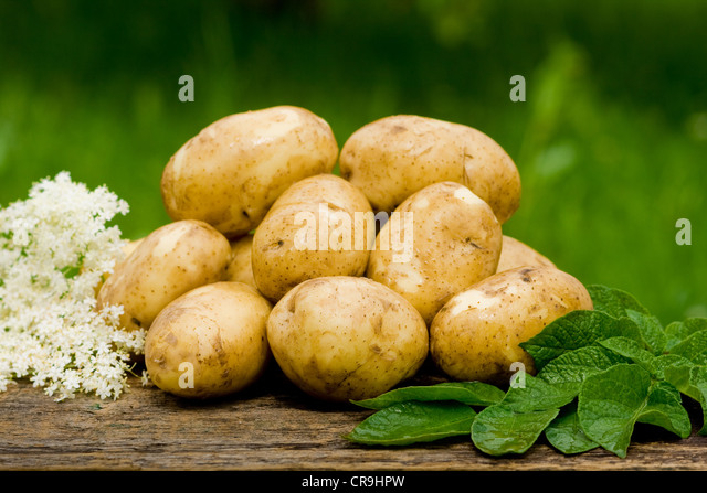 New potatoes, fresh and tasty - Stock Image