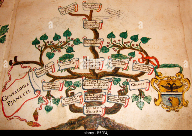 In the famous historic library in Jesi,Le Marche,Italy, the family tree of the Pianetti family of the city - Stock-Bilder