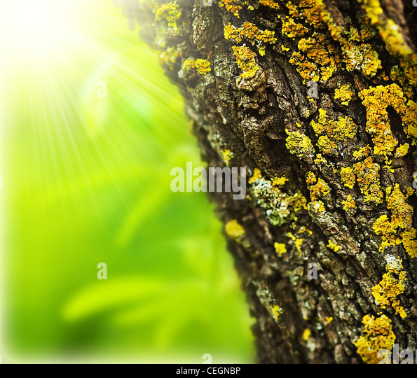 Spring forest abstract background, close up on old tree trunk, sunny springtime day, beautiful nature macro details - Stock Image