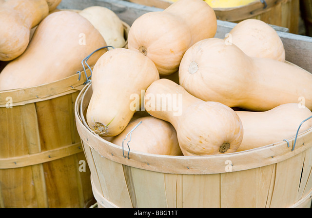 Butternut squash in a basket - Stock Image