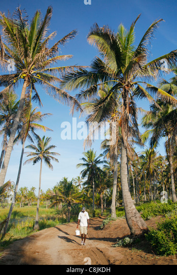 Man walking down the road with coconut trees close to Tofo in Mozambique - Stock Image