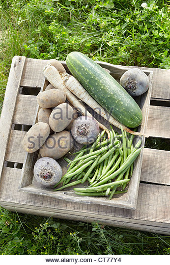 different vegetables in crate - Stock Image