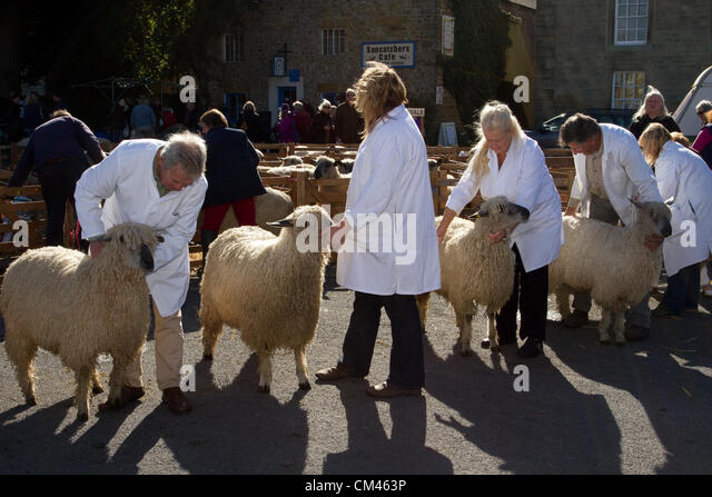 events diary north sheep