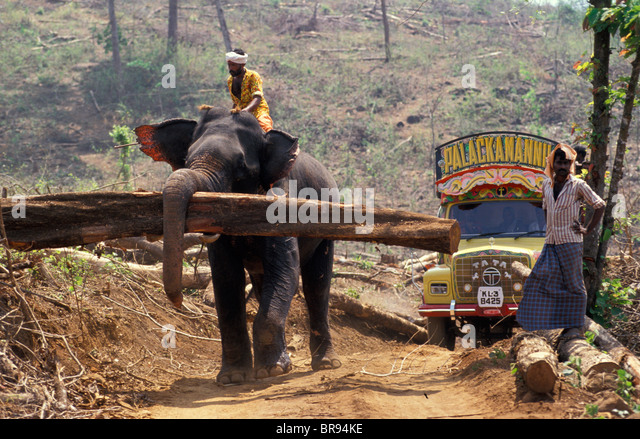 An elephant logging in India. - Stock Image