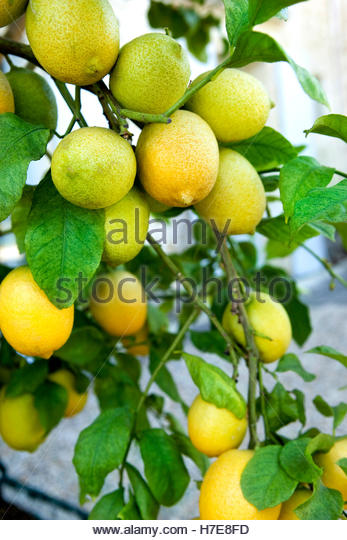 lemon grove muslim Get the latest news and follow the coverage of breaking news events, local news, weird news, national and global politics, and more from the world's top trusted media.
