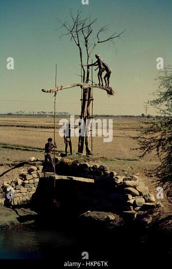 Bewässerung der Felder in Tamil Nadu, Indien, 1962. Irrigation in Tamil Nadu 1962. - Stock-Bilder