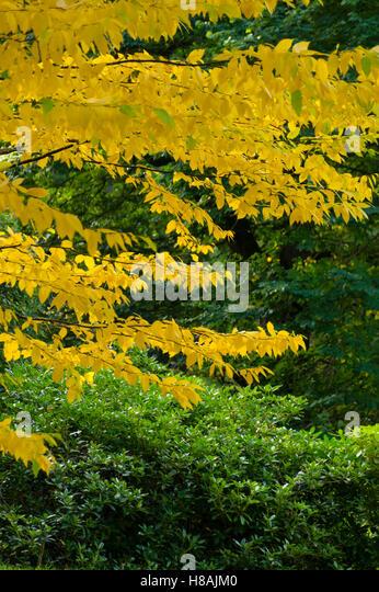 Dawyck scotland stock photos dawyck scotland stock for Garden trees scotland