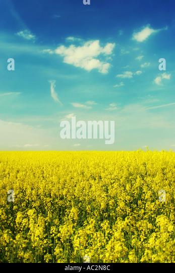 yellow - Stock-Bilder