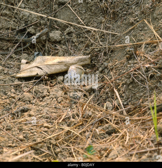 unexploded ordnance awaiting destruction laos - Stock Image