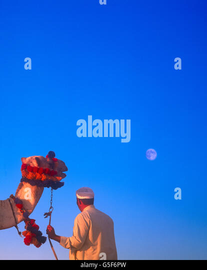 Camel and rider looking at full moon in a deep blue sky, Giza Cairo Egypt - Stock Image