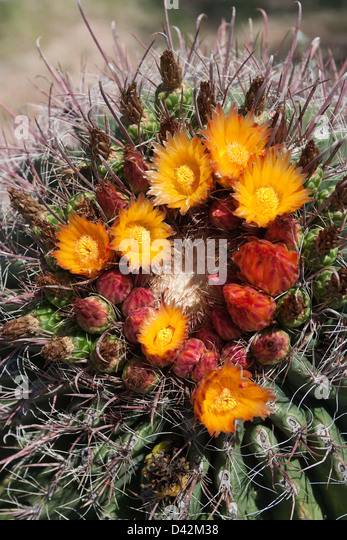 Spikey Flowers Stock Photos & Spikey Flowers Stock Images ...