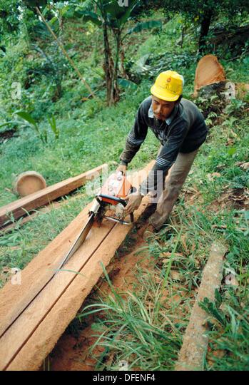 Logging industry. Tabanan, Bali, Indonesia - Stock Image