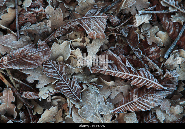 Winter Frosty fallen leaves patern background - Stock-Bilder