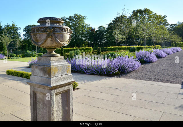 English Country Summer Garden with beds of lavender - Stock Image