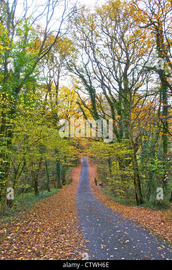 Country lane, road, track in early autumn - walking - Stock Image