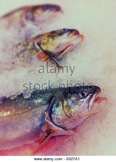 Fresh fish on ice. - Stock Image