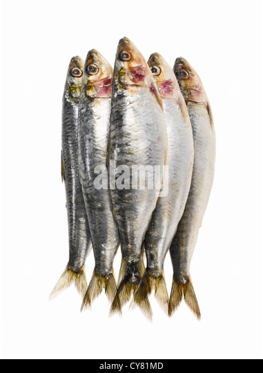 Stacked Fresh Sardines - Stock Image