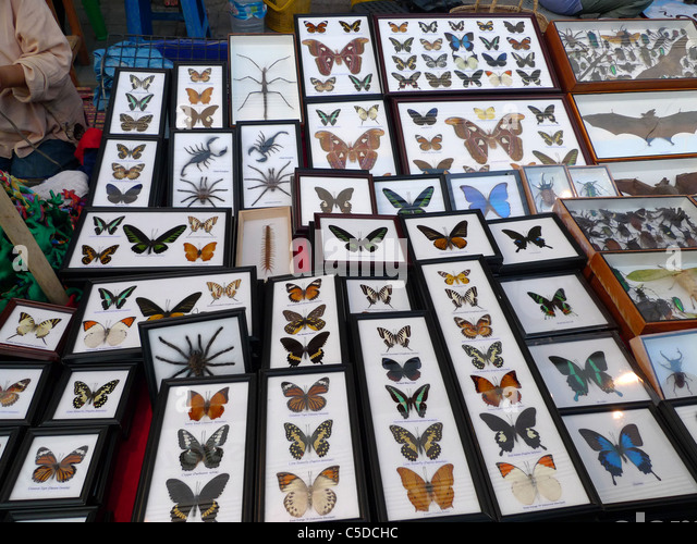THAILAND Chiang Mai. Stall selling insects and spiders in glass cases. Photo by Sean Sprague - Stock-Bilder