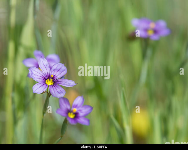 Lthuriel's Spear soft focus - Stock Image