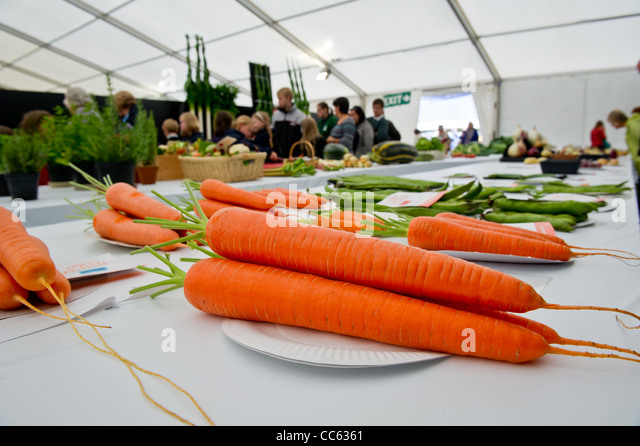 Large carrots on display at food festival - Stock Image