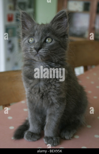 A very cute kitten at home. - Stock Image