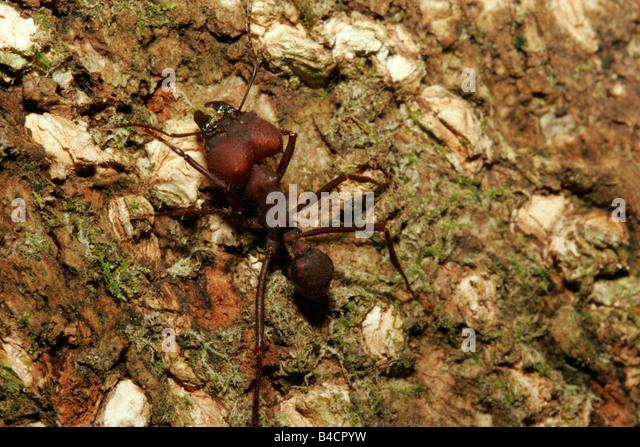 leaf cutter ant trail