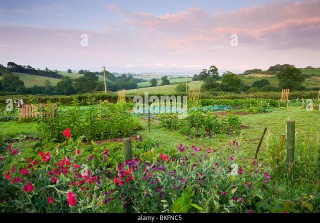Rural Allotment, Morchard Bishop, Devon, England - Stock Image